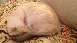 hoprullad katt som ligger på söng och sover.