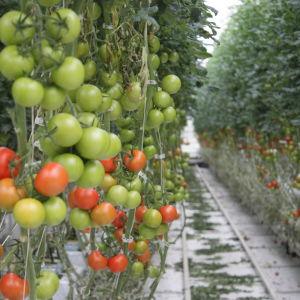Isakssons växthus i Korpo
