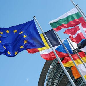 Flaggor från medlemsländerna i EU.