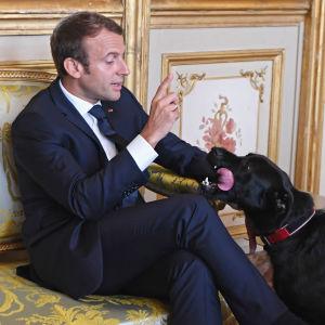 Frankrikes president Emmanuel Macron sitter i en soffa, hans svarta hund står brevid soffan och slickar hans hand.