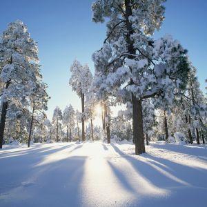 En skog på vintern