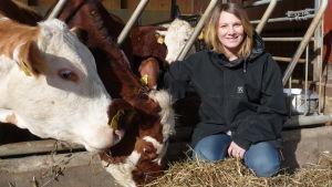 Jessica Aminoff på huk bredvid några brun-vita, hornlösa kor som äter hö.