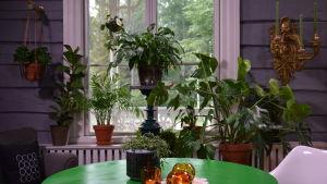 gröna växter i Strömsös vardagsrumsfönster.