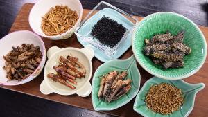 Insekter i skålar i ett kök.