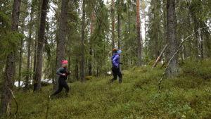 Två kvinnor i löparkläder som springer på en mossig granskogsbacke.