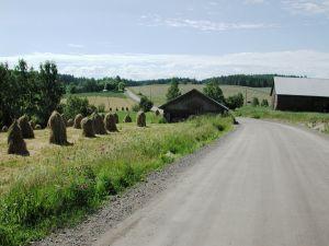 En landsväg på sommaren