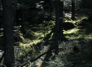 Metsää Repoveden kansallispuistossa
