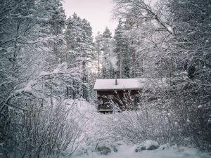 En stuga i skogen.