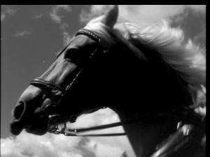 Monikäyttöinen hevonen Tulion elokuvista.