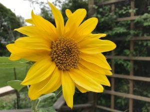 Närbild på gul blomma.