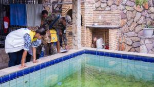 Myndigheter granskar vattensamlingar i Brasilien