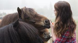 Sabina ger morötter till sina tre hästar.