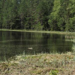 Strand till liten sjö med träd i bakgrunden.