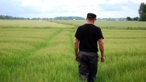 Jordbrukare inspekterar en kornåker