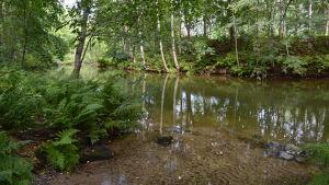 Joki virtaa hiljalleen vehreän lehtimetsän halki.