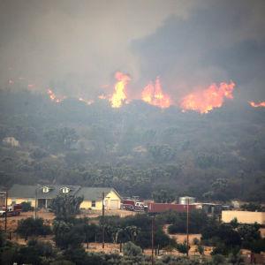 Skogsbranden omkring 120 kilometer öster om Los Angeles, har döpts till Blue Cut. Branden sprids i skogar och raviner vid bergspasset Cajon Pass.