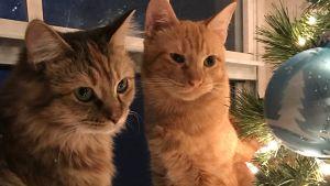 Två katter tittar på en julgran
