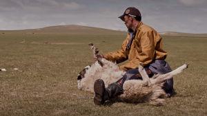 Närbild på en man på stäppen som ska slakta ett får.