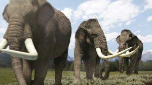 BBC:n kolmiosainen dokumenttisarja selvittää, millaisia eläimiä Pohjois-Amerikassa asui jääkauden aikoihin.