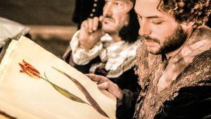 Miehet katsovat kirjasta tulppaanin kuvaa