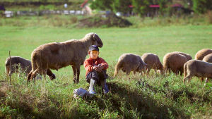Miten käy luomuviljelyn, kun siitä tulee massatuotantoa?