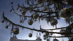 Barrlösa grenar på Roms julgran, pyntade med silverkulor.