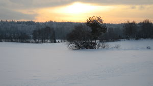 Vinter i Ingå.