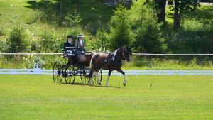 Ett hästekipage på gräsplan. Brunvit häst, två personer med hatt och kavaj i kärran