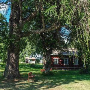 Vehreä puisto, suuri pihta, jonka alla kaksi punaista puistonpenkkiä, taustalla vanha punavalkoinen puutalo
