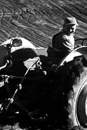 Bonde plöjer med traktor,m 1962