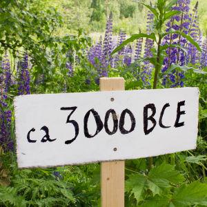 """Kyltti kukkaniityn edessä sanoo """"ca 3000 bce"""""""