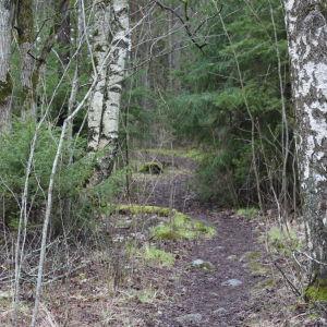 Naturstigen intill Munkviken