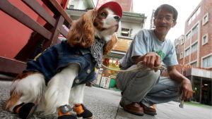 Japanilainen mies ja puettu koira