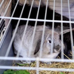 Kaniner i bur
