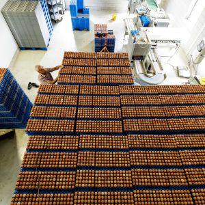 Ägglådor staplade på varandra på en nedstängd hönsgård i Putten, Nederländerna den 1 augusti.