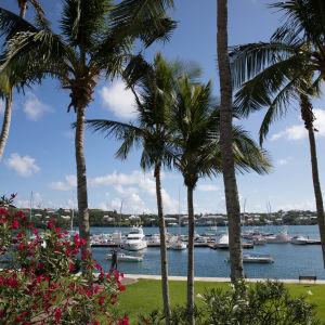 Rantamaisema palmuineen Karibialla.