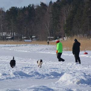 Par med hundar på promenad på isen.