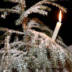 Suolalla koristellun kuusen oksilla palaa aito kynttilä