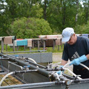 Teuvo Ek tvättar mattor vid Söderkulla gård i sibbo