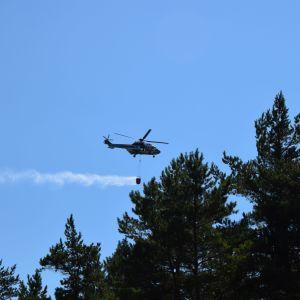 Helikopter som flyger och släcker skogsbrand.