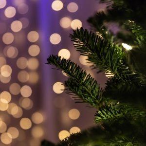 kuusen oksat ja taustalla pehmeitä jouluvaloja