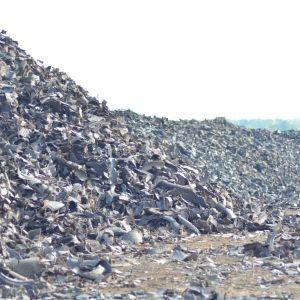 Däckbitar i stora högar på den gamla avstjälpningsplatsen i Jakobstad