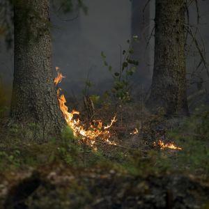 Skogsbrand i Pyhäranta.