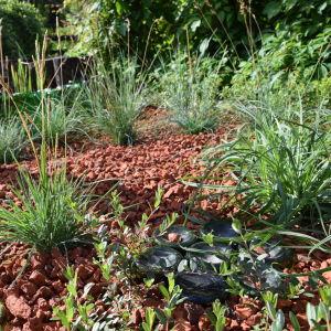 Gräsplantering med små tuvor gräs av olika art