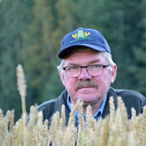 Erik Oljemark på sin veteåker