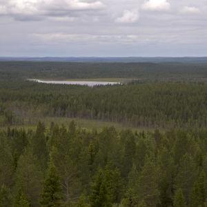 Korpimaisema Itä-Suomessa