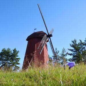 Den röda kvarnen som står på Kvarnåsen i Lovisa.