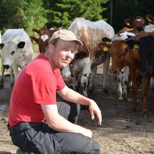 ekomjölkproducenten bjarne mara sitter framför sina ekokossor