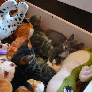 Onerva, Ossi och Olavi i sin låda med kramdjur.