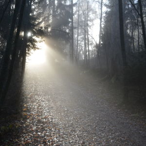 Helt åt skogen på Runsala